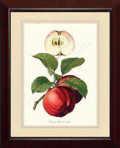 Apple Pomme Roi tres noble Fruit Art Print   #VintageApple #FruitPrint