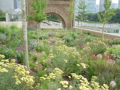A contemporary perennial garden at the Art Institute in Chicago designed and installed by Roy Diblik, co-owner of Northwind Perennial Farm in Burlington, WI.