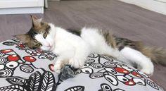 Gallery — felix & milou.  Adorable pet beds at her shop!
