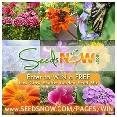 Enter to win a FREE Low Grow Scatter Garden Wildflower Seed Mix! www.seedsnow.com/pages/win Includes a mix of 17 different beautiful flower varieties. A mostly annual flower seed mix that blooms quickly and stays below knee high. Great for containers and edges. #homegrown #organicgardening #growsomethinggreen #urbanfarming #garden #grow #farm #gardening #nongmo #growfood #plants #growyourown #backyardgarden  #heirloom #containergardening #balconygardening #rooftopgardening #fa...