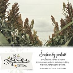 12 days of agriculture