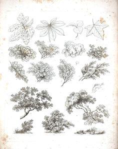 Botanical - Black and White - Tree sketches 2