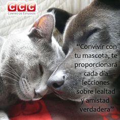 #frases #mascotas