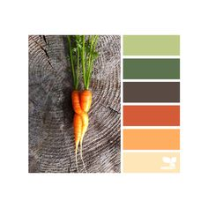 design seeds | search | for all who ♥ color via Polyvore featuring design seeds and colors