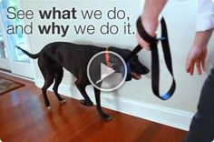 Video: What we do and why we do it