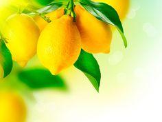 El limonero (Citrus limonum) es un árbol frutal perenne de la familia de las rutáceas. Sus hojas son dentadas, lanceoladas y acabadas en punta. Tiene flores que son blancas por el centro con los bordes rosados. Su fruto es el limón, una fruta que ade