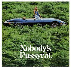 "Jaguar E Type ""Nobody's Pussycat"""