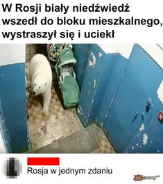 """""""I would say these bears are not hanging around the houses due to climate changes. They have a huge amount of food dumped into nature by humans, Very Funny Memes, The Funny, Why Are You Laughing, Hahaha Hahaha, Polish Memes, Media Lies, Arctic Animals, Wild Animals, Emergency Call"""