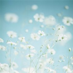 Beautiful Good Morning Card for Media with White Delicate Flowers Foto Nature, All Nature, Green Nature, White Flowers, Beautiful Flowers, Daisy Flowers, Good Morning Cards, Foto Poster, Jolie Photo