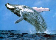 #Whaling, The New Hot Vine Meme