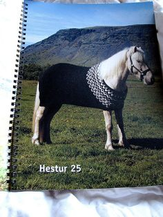a handknit sweater for a horse- how cool is that (from iceland)
