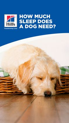 """Have you ever thought """"my dog sleeps all day. Wish I could, too!"""" Dogs do sleep more than humans, and although we may get a little jealous of our pups' luxurious five-hour napping habits, it's important to understand why dogs sleep so much and know what excessive sleeping in dogs really looks like. Sleeping Too Much, Sleeping All Day, Sleeping Dogs, Animal Nutrition, Puppy Food, Healthy Pets, Great Pyrenees, How To Stay Awake, Dog Care"""