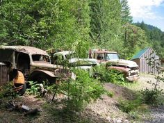 Picture - Rusty cars from an old mining operation in the Willamette National Forest. | PlanetWare