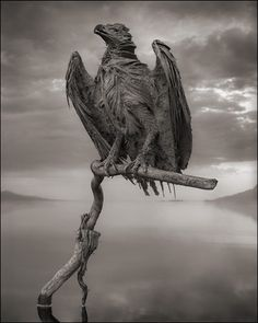 I am both horrified and awed by photographerNick Brandt's images of birds calcified by the overwhelmingly alkaline waters of Lake Natron in...