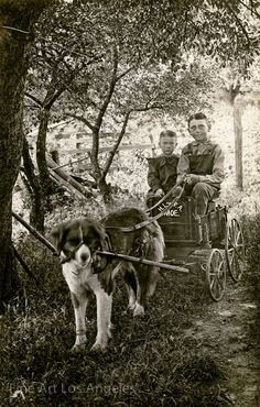Photo of boys and dog cart, 1900