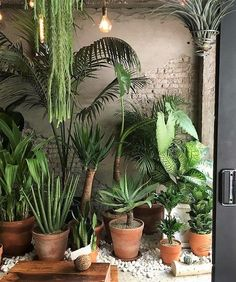 Pin by nikki mualita clark on indoor plants and planters Room With Plants, House Plants Decor, Plant Decor, Plant Rooms, Plantas Indoor, Decoration Plante, Outdoor Plants, Houseplants, Planting Flowers