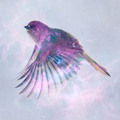 Space sparrow by Marek Niewiadomski, via Behance