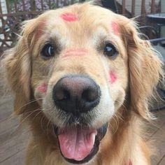 Estas son las unicas marcas que debería tener un animal