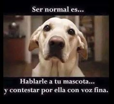 Ser normal es .... Hablarle a tu mascota y contestar por ella con voz fina.  Si te gustan los animales (http://www.schnauzi.com/)