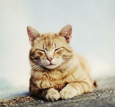 Crazy Cat Lady, Crazy Cats, Kitten Names, Kitten Love, Orange Cats, Cat Sleeping, Ginger Cats, Mans Best Friend, Cute Cats