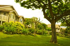 The homes at Fairways at Waikele on Oahu is next to a golf course. #Hawaii