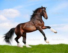 Afbeeldingsresultaat voor galopperend paard