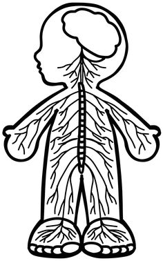Body Craft, Science, Physical Education, Healthy Kids, Human Body, Tribal Tattoos, Coloring Pages, Activities For Kids, Preschool