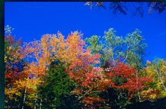 fall_trees_sky_franconia.jpg (1064×700) - twitchwidget