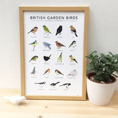 High quality digital print of British Garden Birds illustrations, featuring 19 original illustrations. The birds on the poster are: bullfinch, greenfinch, starling, jay, blue tit, wood pigeon, chaffinch, coal tit, great tit, blackbird, willow warbler, goldfinch, nuthatch, robin, house sparrow, collared dove, pied wagtail, long tailed tit, magpie.