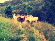 Un poquito de nuestro verano! #MomentosCanVila #Montseny