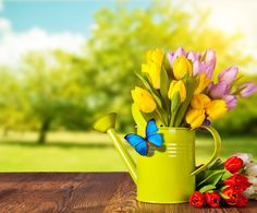 Watering can with flowers and butterfly