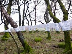 In his ongoing series Tree, Line, Zander Olsen has constructed intriguing scenes where trees are wrapped in white material. These photographs were taken in Surrey, Hampshire and Wales. Olsen attempts to create a new line of horizon - one that is not made by the camera but by the stark white material on the trees.
