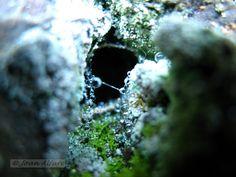 Foto de telaraña con rocío 1