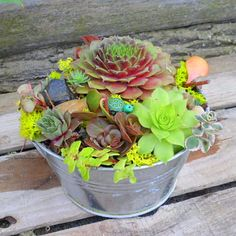 Succulent Dish Garden  A mosaic of colors, unique shapes, interesting textures adorn a 6 inch wide by 3 inch deep Silver Pail lined with plastic.  We scattered rocks and brightly colored moss and add a polymer clay creature to this durable easy to grow planter. Safe for indoors or out.  ***I also have a cream color container.***