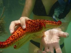 holding a red starfish.