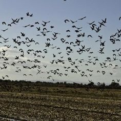 Of Drones and Cranes: UAV Technology Aids California Bird Conservation