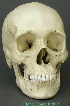 african_female-www.boneclones.com.JPG (320×482)