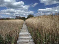 Photo: Hellcat Swamp Marsh Trail at the Parker River National Wildlife Refuge ~ c. Pamela J. Leavey 2012 - See more at: http://pamelaleavey.com/#sthash.OqQzb0KT.dpuf