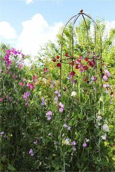h vet ni vilken fin dag jag haf - rabatt Sacred Garden, Sweet Pea Flowers, Allotment Gardening, Flower Farmer, My Fairy Garden, Indoor Flowers, Annual Plants, Garden Trellis, Garden Styles