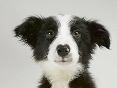 Cute dogs by Sharon Montrose