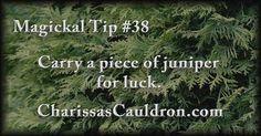 Magickal Tip #38 - Carry a piece of juniper for luck.