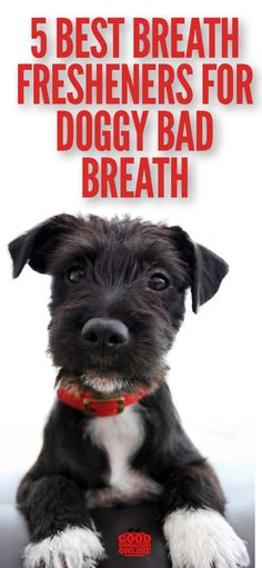 If your dog has bad breath, check out these 5 best remedies for doggy bad breath. #dogs #badbreath #dogcare