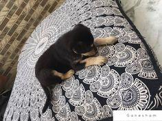Indian Tapestry Mandala Floor Pillow & Cushion Bohemian Pouf Ottoman Dog Bed | Pet Supplies, Dog Supplies, Beds | eBay!