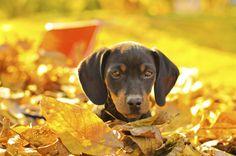 7 Autumn Hazards Your Dog Should Avoid