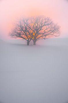 Puesta de sol en el árbol, Chitose, Hokkaido, Japón.