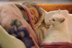 Miyoko Ihara has been taking photographs of her grandmother, Misao and her beloved cat Fukumaru since their relationship began in 2003. Their closeness has been captured through a series of lovely photographs. 2-01-13 / Miyoko Ihara