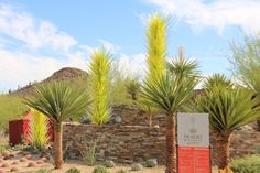 Desert Plants | The Desert Botanical Garden in Phoenix