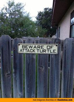 Cuidado con la tortuga.
