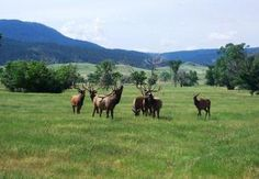 Big Spring Ranch in South Dakota offers a unique opportunity to own a premier recreational property with easy access to Spearfish and the Black Hills.