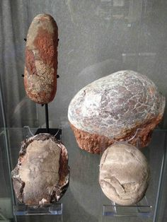 Assorted collection of different types of dinosaur egg fossils from Asia Dino Eggs, Dinosaur Eggs, Dinosaur Fossils, Dinosaur Art, Minerals And Gemstones, Rocks And Minerals, Dinosaur Egg Fossil, Jurassic World Dinosaurs, Extinct Animals